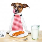 http://www.dreamstime.com/stock-images-hungry-dog-image23266694